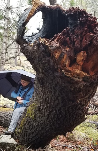 Jeannine Evaluating a Black Oak